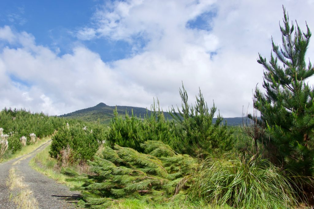 Mount Tutamoe