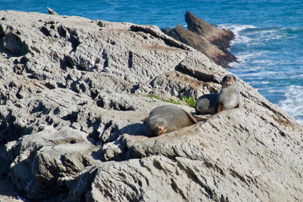 Seals am sonnen