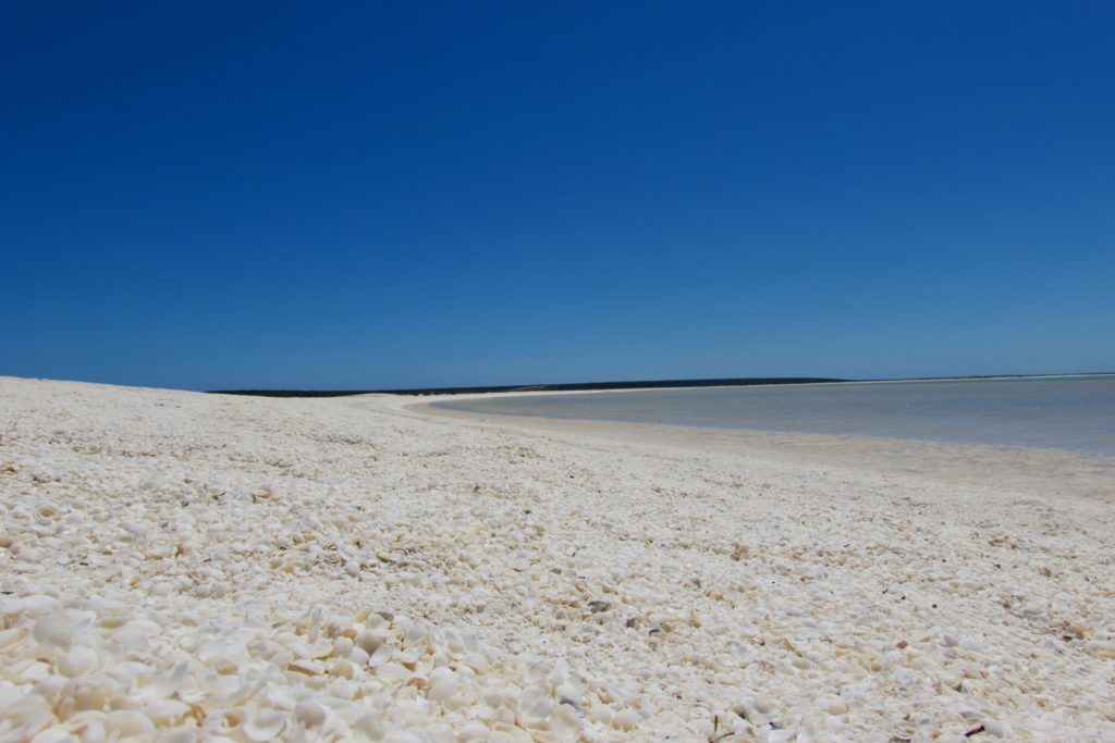 Shell Beach an der Shark Bay