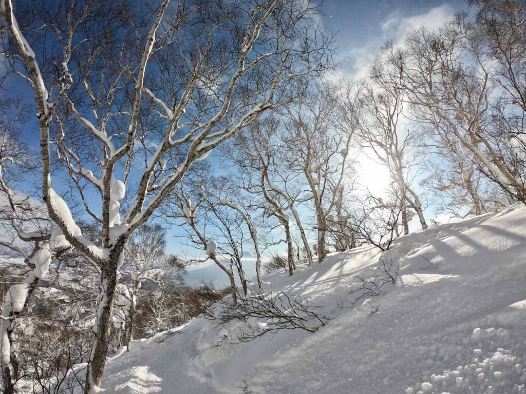 Tree Run in Niseko & Powder