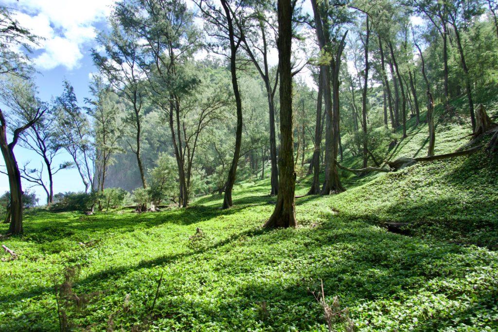 Awini-Trail